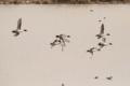 [鳥][三角湖]