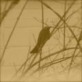 [日常][鳥]