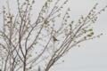 [滝川][鳥]