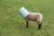 [深川][羊][季の窓]