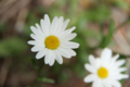 [富良野][なまこ山][花]