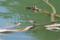 [ダム][雨竜][鳥]