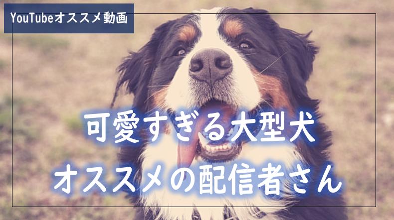 f:id:kurokichidesu:20190723162819p:plain