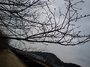 f:id:kurokoshusaru:20070222143547j:image