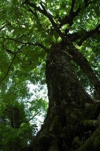 f:id:kurokoshusaru:20070716181246j:image