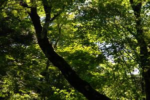 f:id:kurokoshusaru:20080812170736j:image