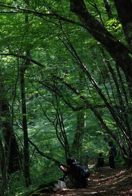 f:id:kurokoshusaru:20080819184102j:image