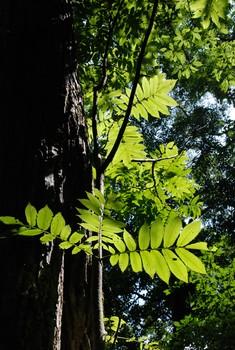 f:id:kurokoshusaru:20080819184319j:image