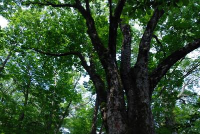 f:id:kurokoshusaru:20080819185509j:image
