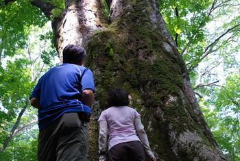 f:id:kurokoshusaru:20080819185659j:image