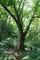 森神が宿る老木