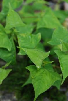 f:id:kurokoshusaru:20080911183507j:image