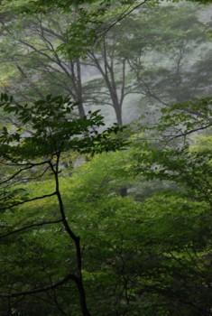 f:id:kurokoshusaru:20080911184622j:image
