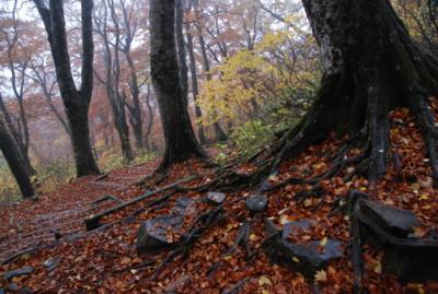 f:id:kurokoshusaru:20081110183419j:image