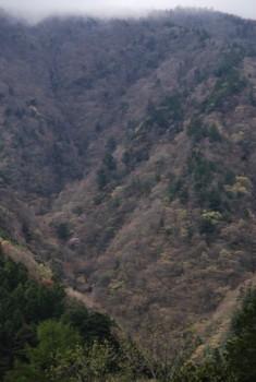 f:id:kurokoshusaru:20090428121253j:image