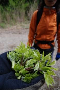f:id:kurokoshusaru:20090428121957j:image