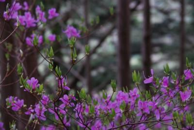 f:id:kurokoshusaru:20090429162031j:image