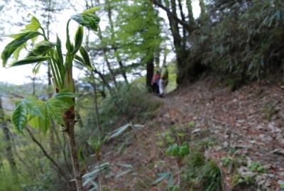f:id:kurokoshusaru:20090504163647j:image