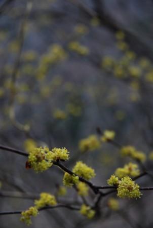 f:id:kurokoshusaru:20100314184140j:image