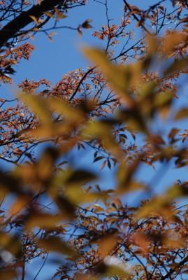 f:id:kurokoshusaru:20100427121316j:image
