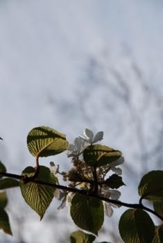f:id:kurokoshusaru:20100517120808j:image