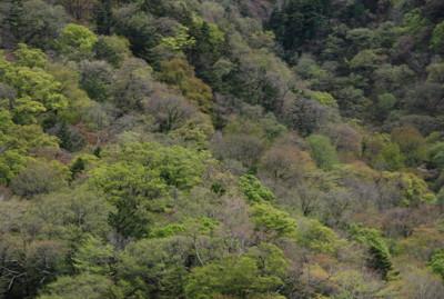 f:id:kurokoshusaru:20100517175851j:image