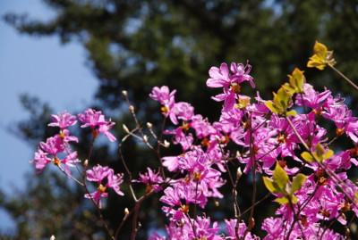 f:id:kurokoshusaru:20100519122724j:image