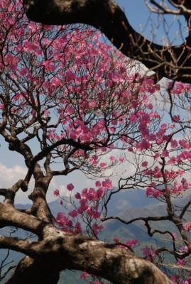 f:id:kurokoshusaru:20100519122819j:image