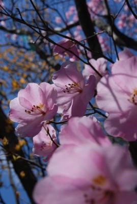 f:id:kurokoshusaru:20100519122827j:image