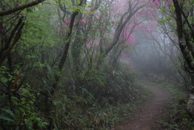 f:id:kurokoshusaru:20100531120604j:image