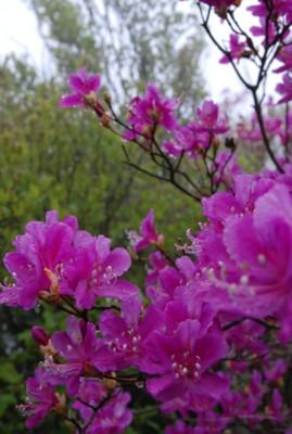 f:id:kurokoshusaru:20100531120814j:image