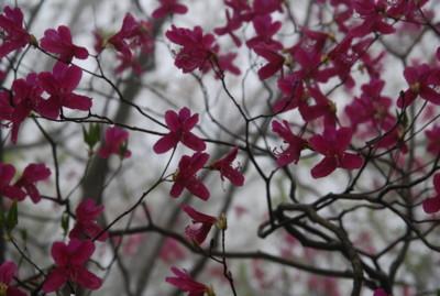 f:id:kurokoshusaru:20100531121020j:image