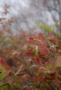 f:id:kurokoshusaru:20100531121356j:image