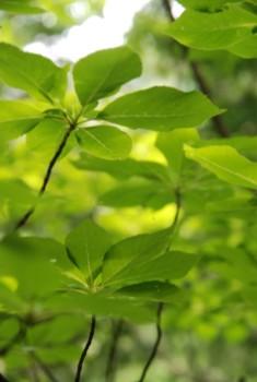 f:id:kurokoshusaru:20100614120342j:image