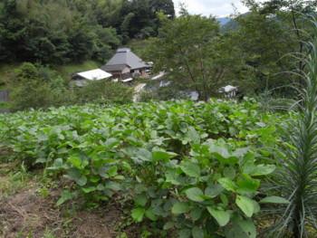 f:id:kurokoshusaru:20100819184432j:image