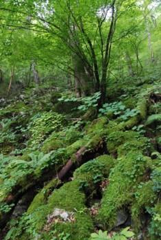 f:id:kurokoshusaru:20100822184019j:image