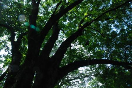f:id:kurokoshusaru:20100822190459j:image