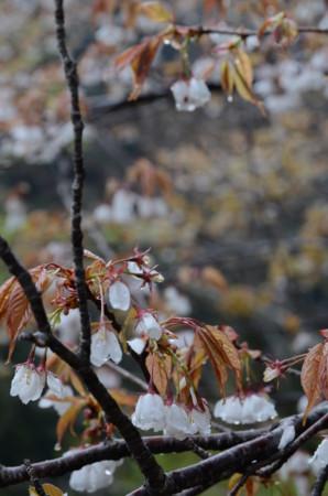 f:id:kurokoshusaru:20110425062353j:image