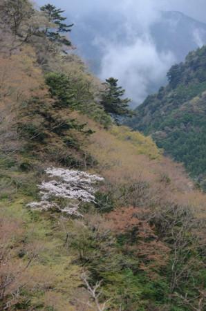 f:id:kurokoshusaru:20110425062810j:image