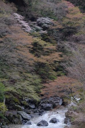 f:id:kurokoshusaru:20110425195501j:image