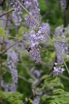 f:id:kurokoshusaru:20110509042331j:image