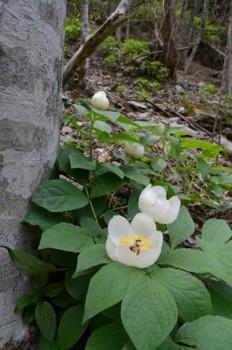 f:id:kurokoshusaru:20110509044352j:image