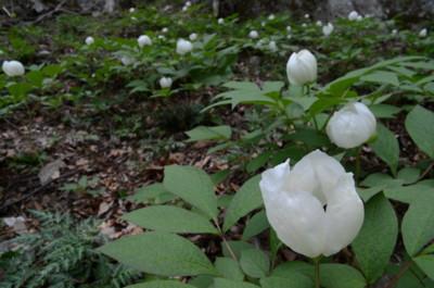 f:id:kurokoshusaru:20110509044648j:image