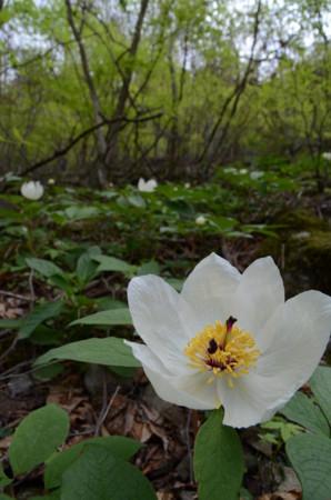 f:id:kurokoshusaru:20110509045137j:image