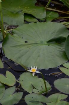 f:id:kurokoshusaru:20110714192736j:image