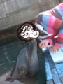 イルカのみちこ