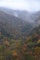 奥祖谷の森