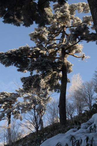 f:id:kurokoshusaru:20111218062339j:image