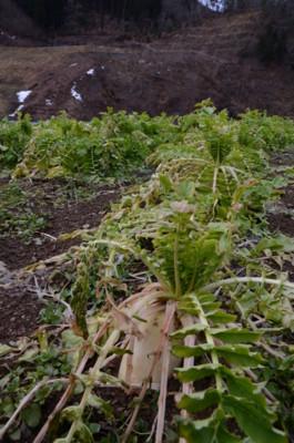 f:id:kurokoshusaru:20120124051448j:image