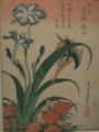 翡翠、鳶尾草、瞿麦
